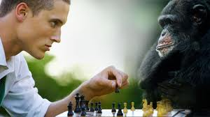 Primates and Humans Are More Closely Related Than You Think!