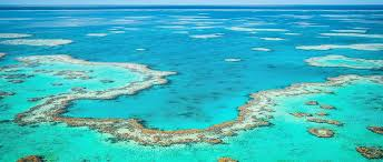 Death of the Great Barrier Reef?